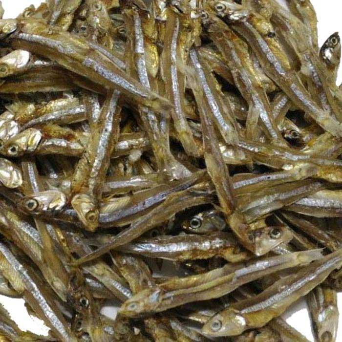 Mola Shutki (oraganic)
